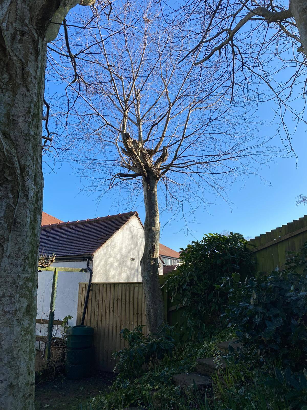 Tree Removal Thornton